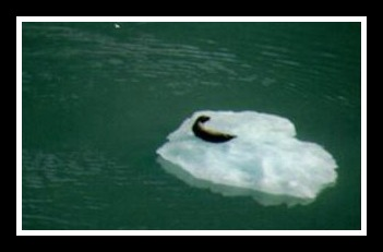 iceberg3fr