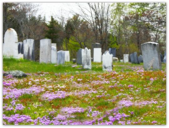 wildflowercemeteryfr